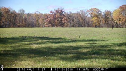 2018-10-27 Trail Cam Whitetail Deer Hunting Minnesota