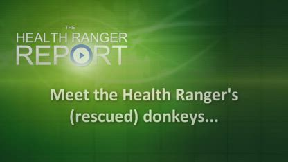 Meet the Health Ranger's rescued donkeys