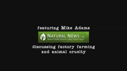 The Truth About Factory Farming and Beef Slaughterhouses
